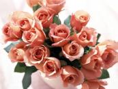Juguete suave+ chocolates  + 15 rosas de cualquier color (pequenitas)
