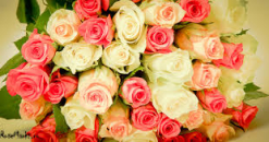 17 any color  long stem roses