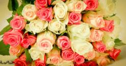 17 rosas de cualquier color (largas)